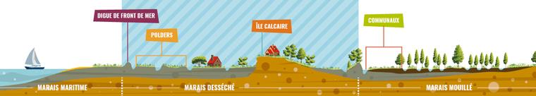 Schéma des paysages du Marais poitevin : Le marais desséché avec ses polders, canaux et îlots calcaires