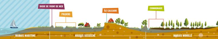 Schéma des paysages du Marais poitevin : Le marais maritime correspondant à la Baie de l'Aiguillon