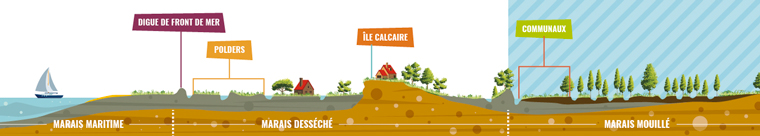 Schéma des paysages du Marais poitevin : Le marais mouillé avec ses communaux et prairies humides