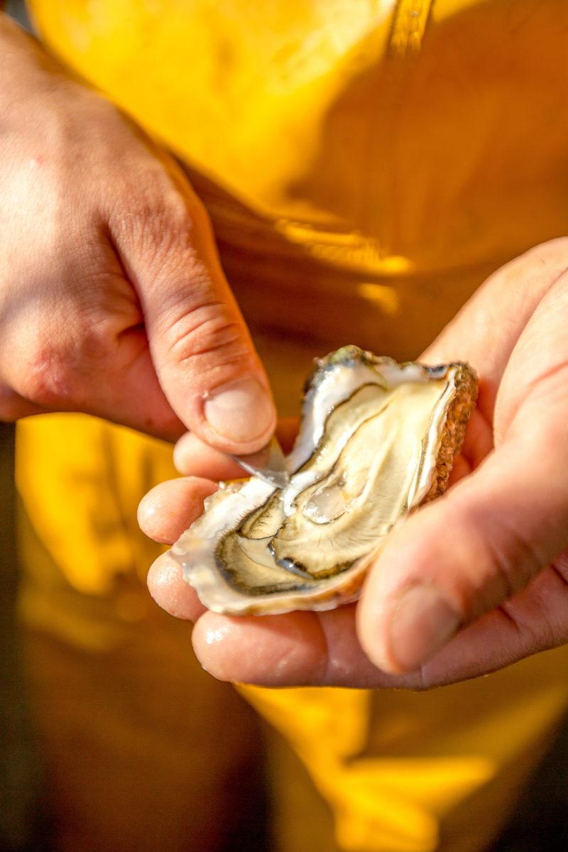 huitre saveurs mer vendee atlantique laiguillon ostreiculteur gaudin