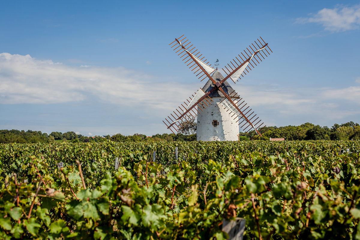 moulin vignoble vin mareuillais fiefs vendéens rosnay